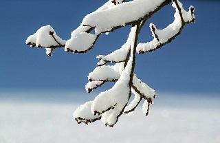 Der Zitrusbaum ist nicht winterhart